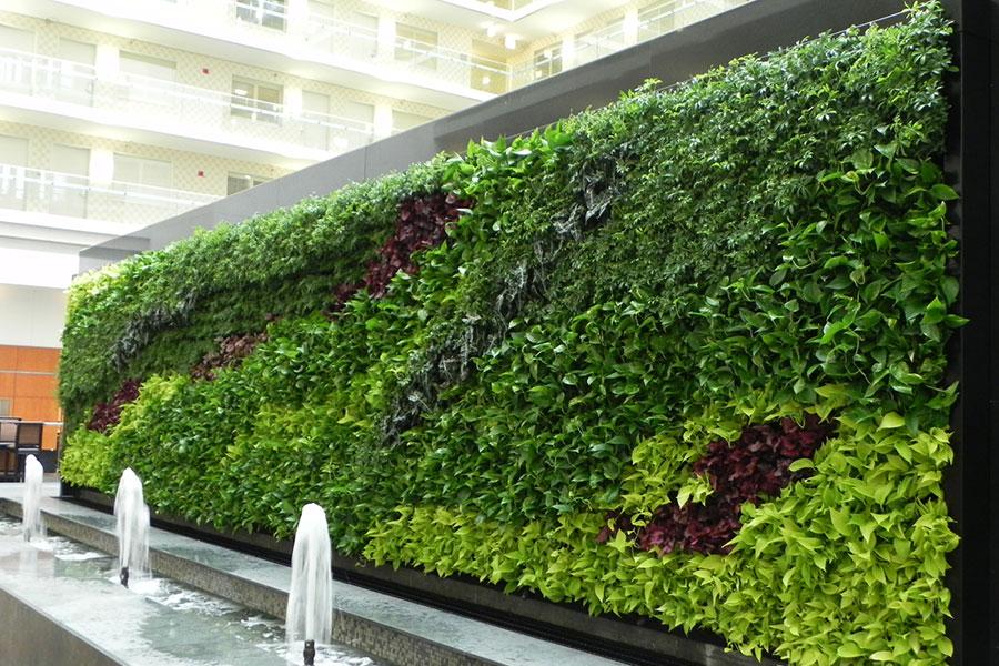 Finitto for Muros verdes naturales